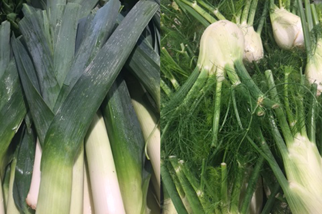 Fennel-and-Leeks